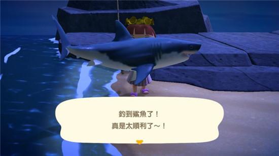 夏日海中的王者就是各种鲨鱼。